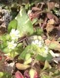 小さい花2.JPG